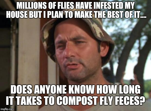 Lord of the flies' dung! | MILLIONS OF FLIES HAVE INFESTED MY HOUSE BUT I PLAN TO MAKE THE BEST OF IT.... DOES ANYONE KNOW HOW LONG IT TAKES TO COMPOST FLY FECES? | image tagged in memes,so i got that goin for me which is nice,fly,flies,lord of the flies | made w/ Imgflip meme maker