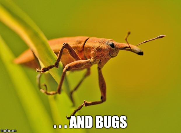 Happy Insect | . . . AND BUGS | image tagged in happy insect | made w/ Imgflip meme maker