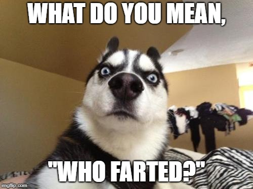 "Don't blame me again! | WHAT DO YOU MEAN, ""WHO FARTED?"" 