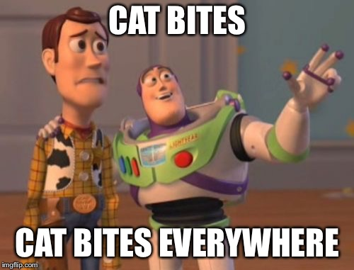 X, X Everywhere | CAT BITES CAT BITES EVERYWHERE | image tagged in x x everywhere | made w/ Imgflip meme maker