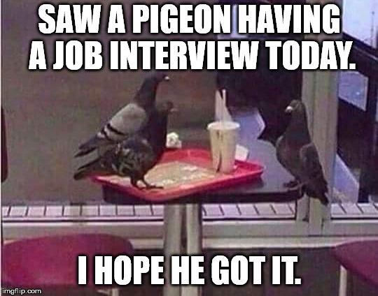It's nice to see unemployment so low. | SAW A PIGEON HAVING A JOB INTERVIEW TODAY. I HOPE HE GOT IT. | image tagged in pigeons | made w/ Imgflip meme maker