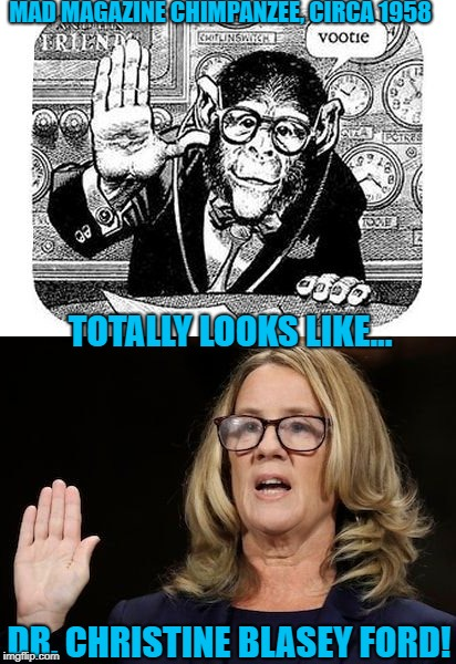 Uncanny! A resemblance that spans 60 years! Check the glasses! | MAD MAGAZINE CHIMPANZEE, CIRCA 1958 TOTALLY LOOKS LIKE... DR. CHRISTINE BLASEY FORD! | image tagged in monkey business,kavanaugh,christine blasey ford | made w/ Imgflip meme maker