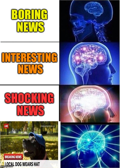 That's a nice hat. | BORING NEWS INTERESTING NEWS SHOCKING NEWS | image tagged in memes,expanding brain,dog,hat,funny | made w/ Imgflip meme maker
