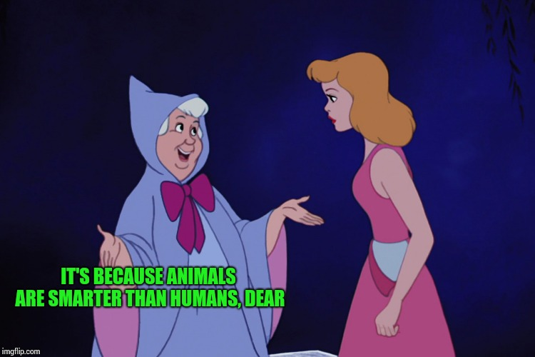IT'S BECAUSE ANIMALS ARE SMARTER THAN HUMANS, DEAR | made w/ Imgflip meme maker