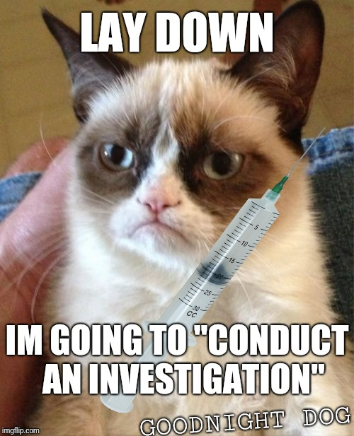 "Grumpy Cat Meme | LAY DOWN IM GOING TO ""CONDUCT  AN INVESTIGATION"" GOODNIGHT DOG 