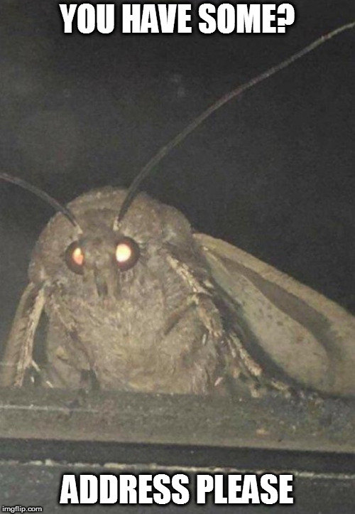Moth | YOU HAVE SOME? ADDRESS PLEASE | image tagged in moth | made w/ Imgflip meme maker