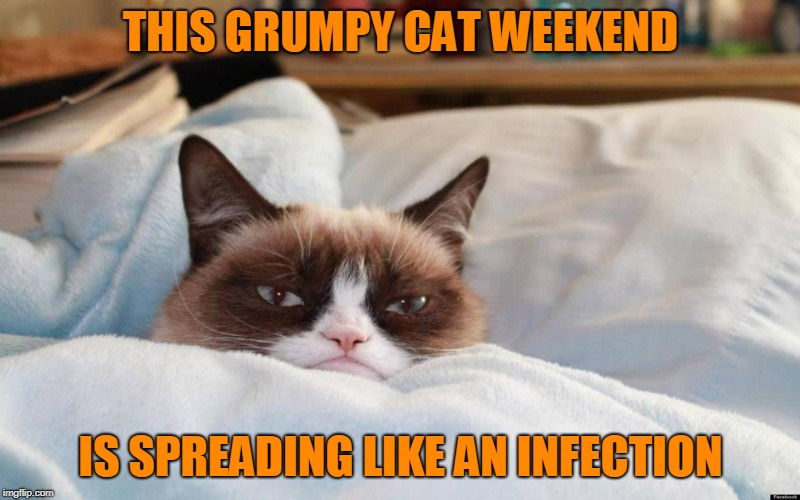 grumpy cat bed | THIS GRUMPY CAT WEEKEND IS SPREADING LIKE AN INFECTION | image tagged in grumpy cat bed | made w/ Imgflip meme maker