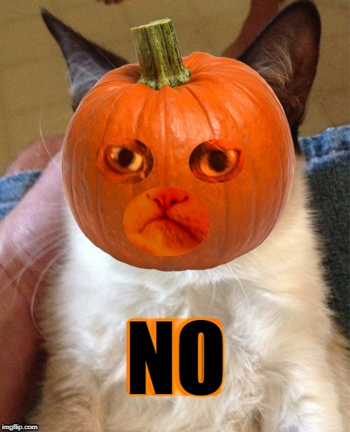 Grumpy Cat is protesting animal halloween costumes. | NO | image tagged in grumpy cat,pumpkin,protest,halloween,holidays,peta | made w/ Imgflip meme maker