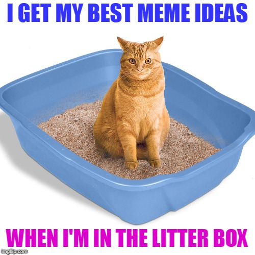 I GET MY BEST MEME IDEAS WHEN I'M IN THE LITTER BOX | made w/ Imgflip meme maker