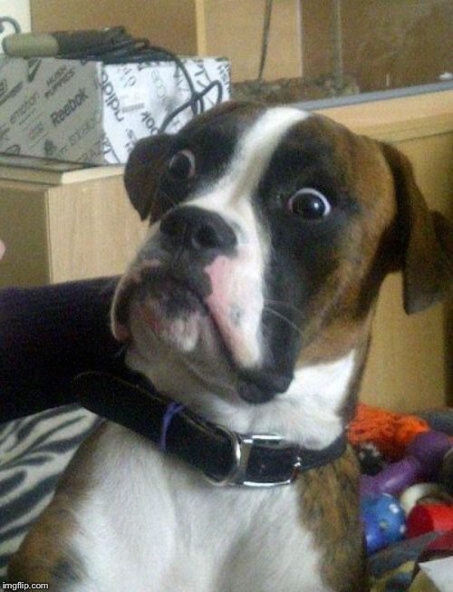 Blankie the Shocked Dog | . | image tagged in blankie the shocked dog | made w/ Imgflip meme maker