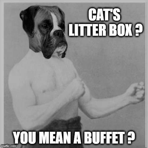 Overly Manly Dog | CAT'S LITTER BOX ? YOU MEAN A BUFFET ? | image tagged in funny memes,overly manly man,overly manly dog,gross,dog | made w/ Imgflip meme maker