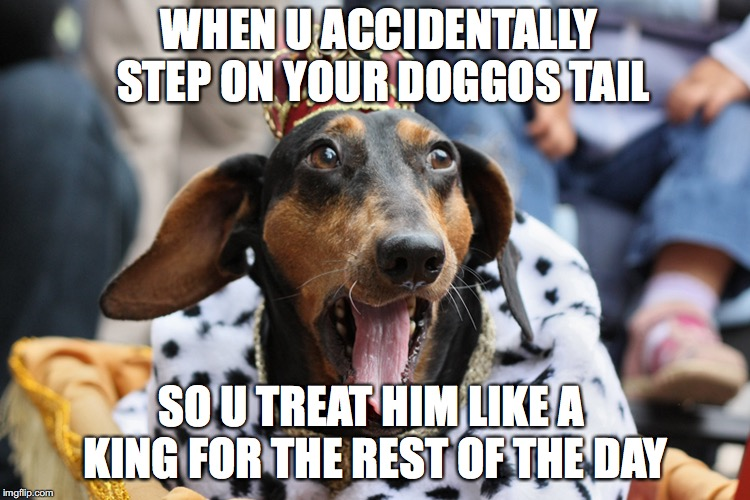 WHEN U ACCIDENTALLY STEP ON YOUR DOGGOS TAIL SO U TREAT HIM LIKE A KING FOR THE REST OF THE DAY | image tagged in doggos,memes,funny memes,pets | made w/ Imgflip meme maker