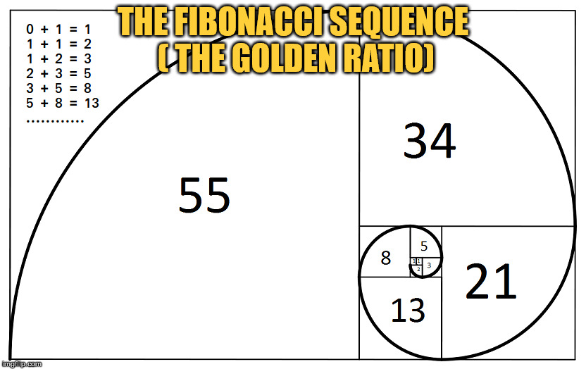 THE FIBONACCI SEQUENCE ( THE GOLDEN RATIO)  | THE FIBONACCI SEQUENCE ( THE GOLDEN RATIO) | image tagged in the fibonacci sequence | made w/ Imgflip meme maker