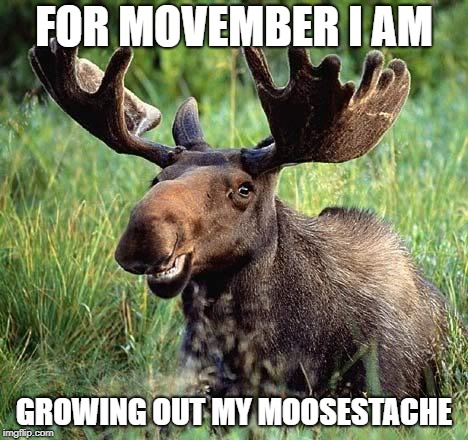 When You Want To Raise Awareness For Testicular Cancer | FOR MOVEMBER I AM GROWING OUT MY MOOSESTACHE | image tagged in smiling moose,november,no shave november,movember,cancer,testicles | made w/ Imgflip meme maker