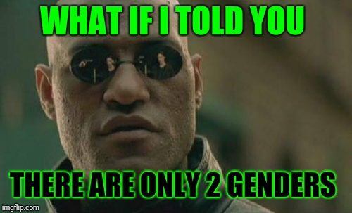 There are only 2 and there will be only 2. Nothing else matters  | WHAT IF I TOLD YOU THERE ARE ONLY 2 GENDERS | image tagged in memes,matrix morpheus,gender,only 2 genders | made w/ Imgflip meme maker
