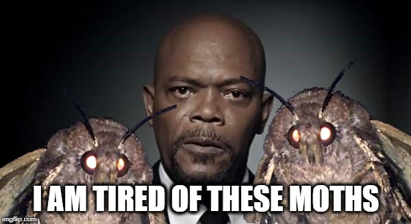He's tired of them. | I AM TIRED OF THESE MOTHS | image tagged in samuel l jackson,moths,horror,halloween,snakes on a plane | made w/ Imgflip meme maker