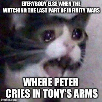 EVERYBODY ELSE WHEN THE WATCHING THE LAST PART OF INFINITY WARS WHERE PETER CRIES IN TONY'S ARMS | image tagged in screaming cat | made w/ Imgflip meme maker