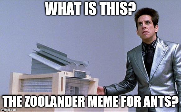 Zoolander | WHAT IS THIS? THE ZOOLANDER MEME FOR ANTS? | image tagged in zoolander | made w/ Imgflip meme maker