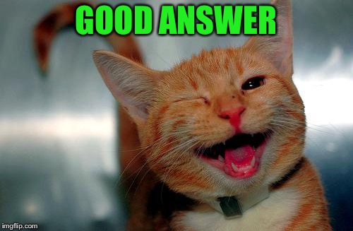 winky kitty | GOOD ANSWER | image tagged in winky kitty | made w/ Imgflip meme maker