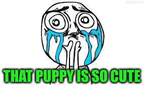 Crying Because Of Cute Meme | THAT PUPPY IS SO CUTE | image tagged in memes,crying because of cute | made w/ Imgflip meme maker