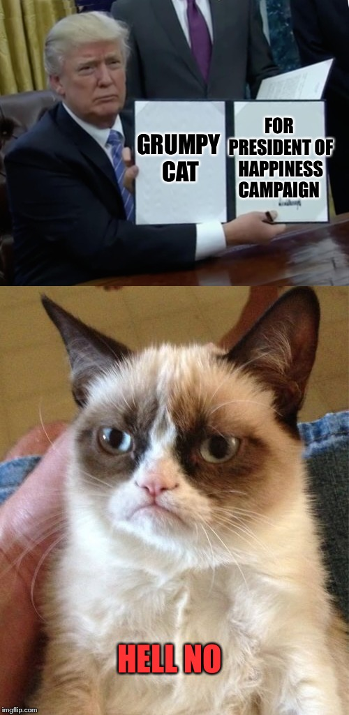 Grumpy Cat Weekend by Craziness_all_the_way and socrates!  | GRUMPY CAT FOR PRESIDENT OF HAPPINESS CAMPAIGN HELL NO | image tagged in craziness_all_the_way,socrates,grumpy cat,trump bill signing | made w/ Imgflip meme maker