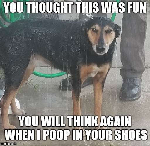 Hope | YOU THOUGHT THIS WAS FUN YOU WILL THINK AGAIN WHEN I POOP IN YOUR SHOES | image tagged in hope | made w/ Imgflip meme maker