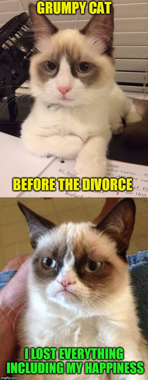 Grumpy Cat Weekend, a Socraziness_all_the_way event, Oct 5-8. | GRUMPY CAT BEFORE THE DIVORCE I LOST EVERYTHING INCLUDING MY HAPPINESS | image tagged in memes,grumpy cat weekend,socrates,craziness_all_the_way,divorce,grumpy cat | made w/ Imgflip meme maker