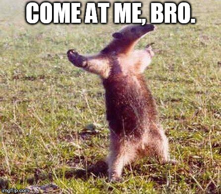 Come At Me Bro | COME AT ME, BRO. | image tagged in come at me bro | made w/ Imgflip meme maker
