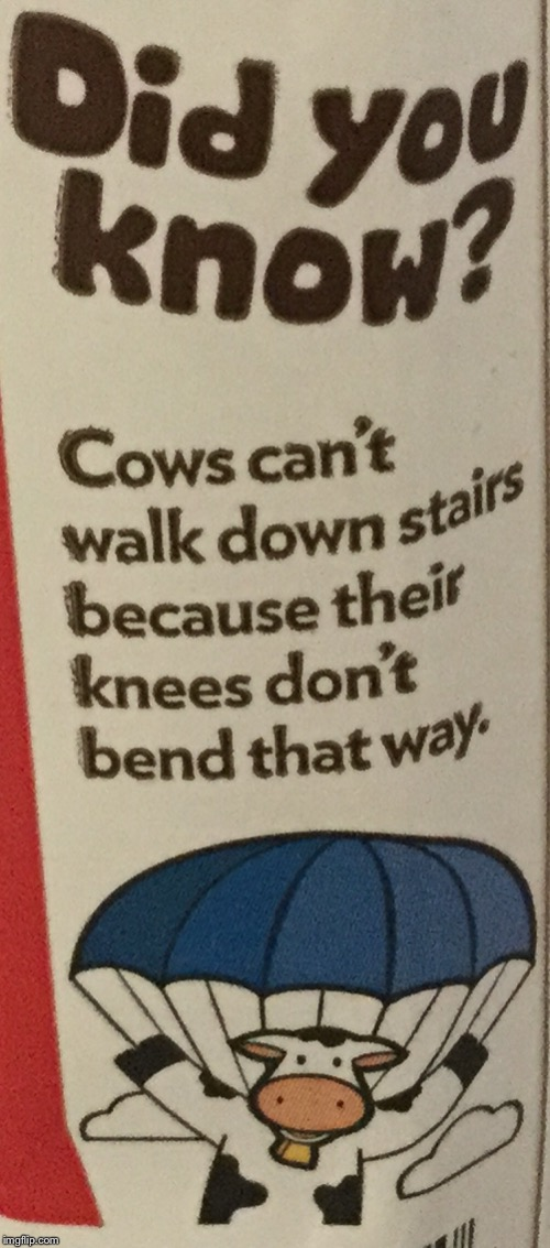 Fun fact of the day | image tagged in cows cant walk down stairs,parachute,cow | made w/ Imgflip meme maker