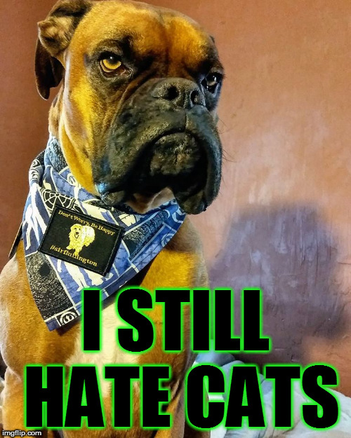 Grumpy Dog | I STILL HATE CATS | image tagged in grumpy dog | made w/ Imgflip meme maker