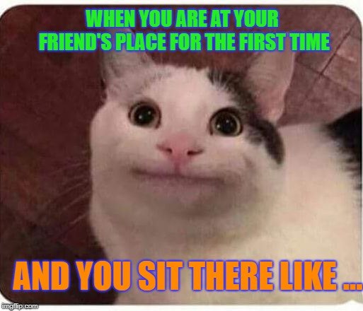 Hahah,anyone can relate to this? | WHEN YOU ARE AT YOUR FRIEND'S PLACE FOR THE FIRST TIME AND YOU SIT THERE LIKE ... | image tagged in polite cat,funny,relatable,imgflip | made w/ Imgflip meme maker