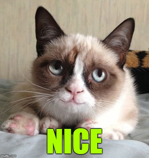 Smiling grumpy cat | NICE | image tagged in smiling grumpy cat | made w/ Imgflip meme maker