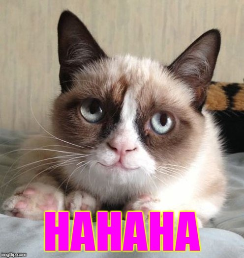Smiling grumpy cat | HAHAHA | image tagged in smiling grumpy cat | made w/ Imgflip meme maker