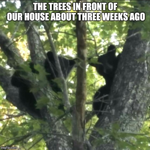 THE TREES IN FRONT OF OUR HOUSE ABOUT THREE WEEKS AGO | made w/ Imgflip meme maker