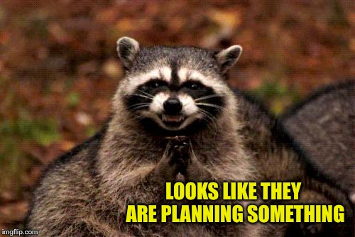 Evil Plotting Raccoon Meme | LOOKS LIKE THEY ARE PLANNING SOMETHING | image tagged in memes,evil plotting raccoon | made w/ Imgflip meme maker