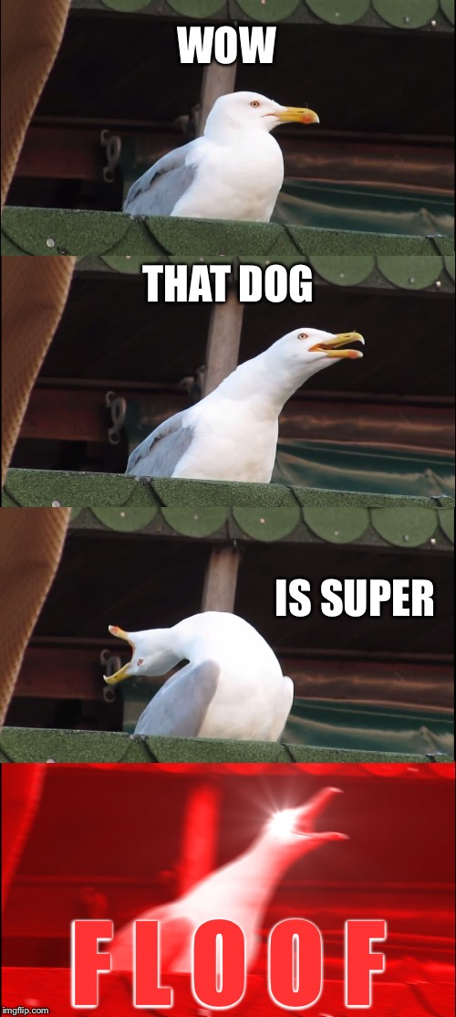 Inhaling Seagull Meme | WOW THAT DOG IS SUPER F L O O F | image tagged in memes,inhaling seagull | made w/ Imgflip meme maker