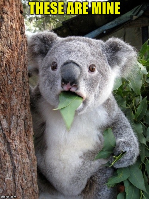 Surprised Koala Meme | THESE ARE MINE | image tagged in memes,surprised coala | made w/ Imgflip meme maker