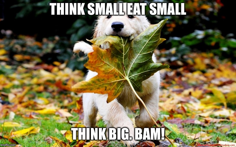 leaf puppy nature | THINK SMALL EAT SMALL THINK BIG. BAM! | image tagged in leaf puppy nature | made w/ Imgflip meme maker