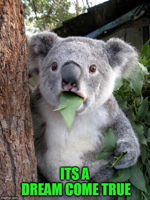 Surprised Koala Meme | ITS A DREAM COME TRUE | image tagged in memes,surprised koala | made w/ Imgflip meme maker