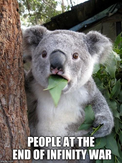 Surprised Koala Meme | PEOPLE AT THE END OF INFINITY WAR | image tagged in memes,surprised koala | made w/ Imgflip meme maker