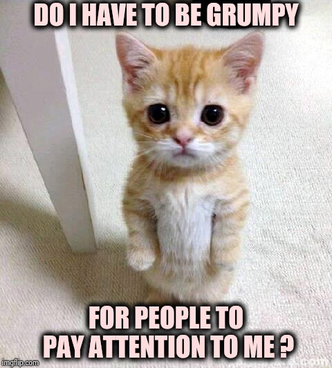 Cat memes , Cat memes everywhere | DO I HAVE TO BE GRUMPY FOR PEOPLE TO PAY ATTENTION TO ME ? | image tagged in memes,cute cat,grumpy cat,why not both,espurr | made w/ Imgflip meme maker