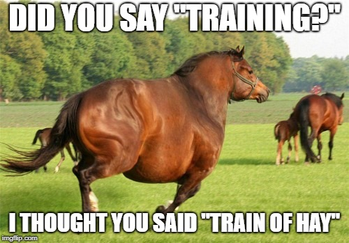 "Hay everyone after nearly a few months of absence, I'm back! :D | DID YOU SAY ""TRAINING?"" I THOUGHT YOU SAID ""TRAIN OF HAY"" 