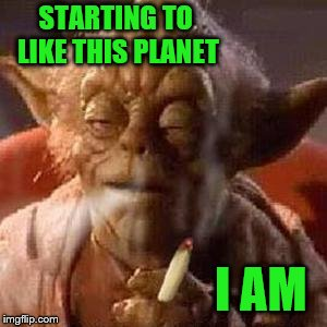 Yoda stoned | STARTING TO LIKE THIS PLANET I AM | image tagged in yoda stoned | made w/ Imgflip meme maker