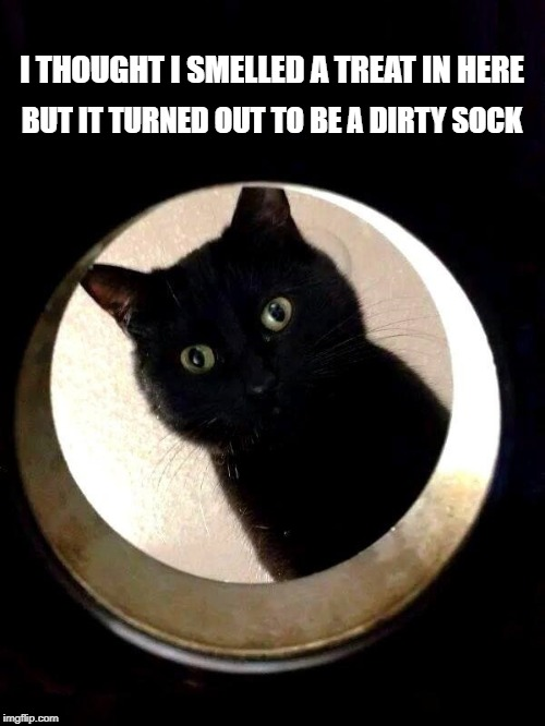 I THOUGHT I SMELLED A TREAT IN HERE BUT IT TURNED OUT TO BE A DIRTY SOCK | image tagged in cat,treats,dirty laundry,snacks,smelly,kitty | made w/ Imgflip meme maker