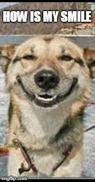SMILE DOG | HOW IS MY SMILE | image tagged in funny | made w/ Imgflip meme maker