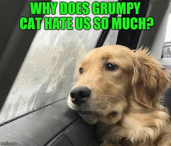 WHY DOES GRUMPY CAT HATE US SO MUCH? | made w/ Imgflip meme maker