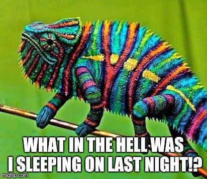 What was I sleeping on? | WHAT IN THE HELL WAS I SLEEPING ON LAST NIGHT!? | image tagged in funny chameleon,what was i sleeping | made w/ Imgflip meme maker