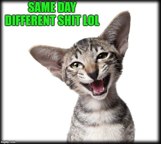 kitten | SAME DAY DIFFERENT SHIT LOL | image tagged in kitten | made w/ Imgflip meme maker