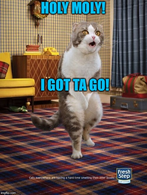 Gotta Go Cat | HOLY MOLY! I GOT TA GO! | image tagged in memes,gotta go cat | made w/ Imgflip meme maker