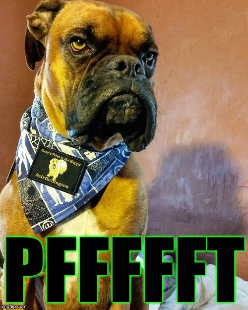 Grumpy Dog | PFFFFFT | image tagged in grumpy dog | made w/ Imgflip meme maker